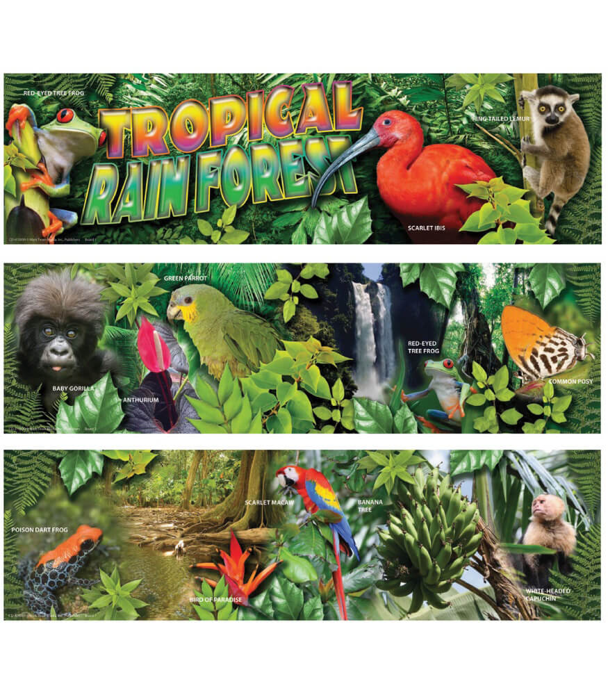 Plants In The Tropical Rainforest Collage Tropical Rain Forest M...