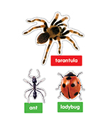 Photographic Insects and Spiders Bulletin Board Set