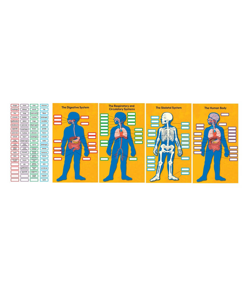 Human Body Bulletin Board Set Product Image