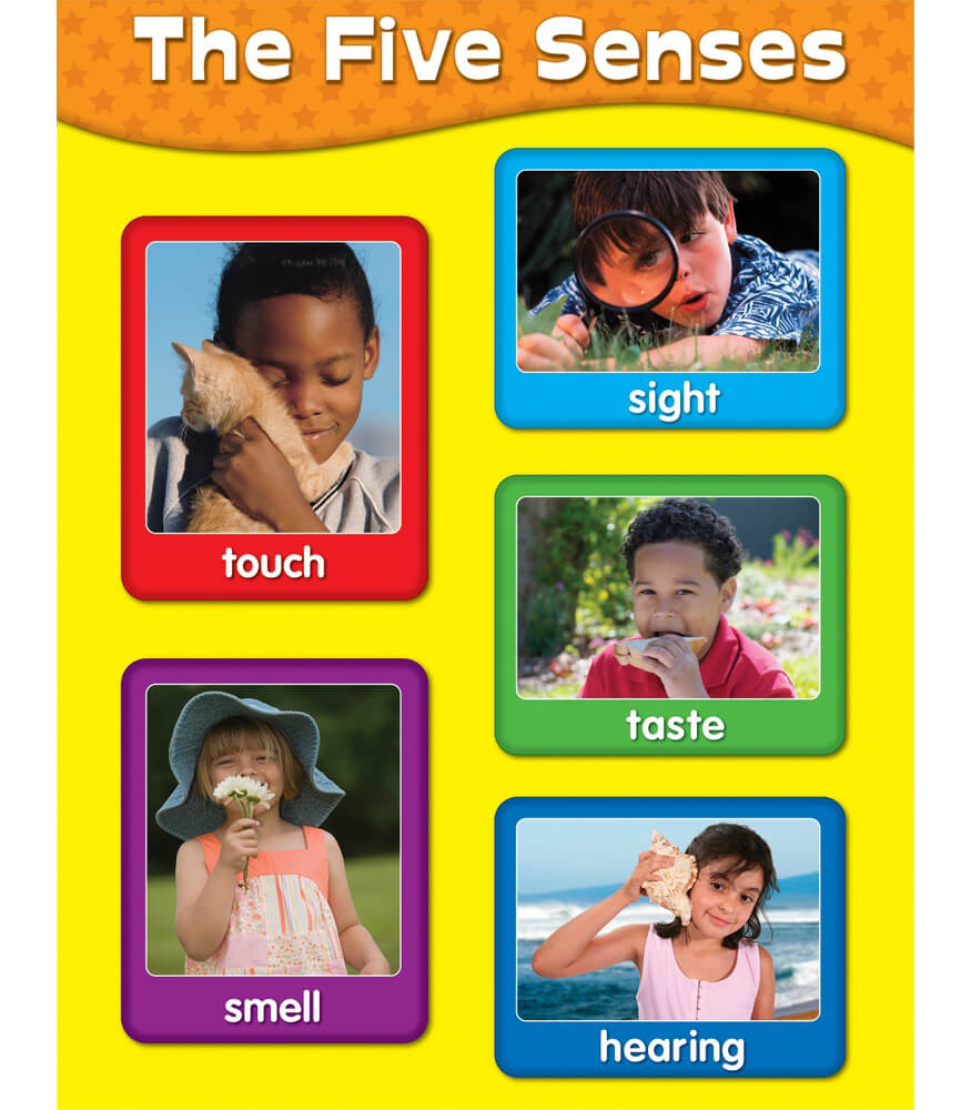 The Five Senses Chart Product Image