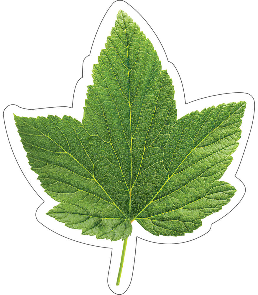 Woodland Whimsy Green Leaf Cut-Outs Product Image