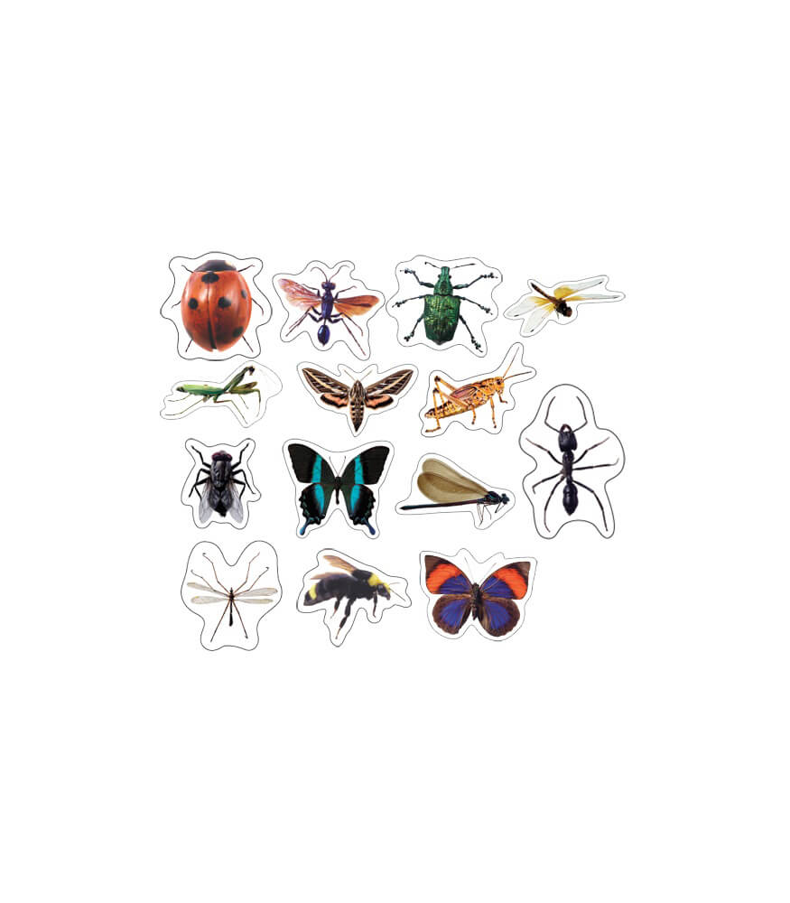 Insects: Photographic Shape Stickers Product Image