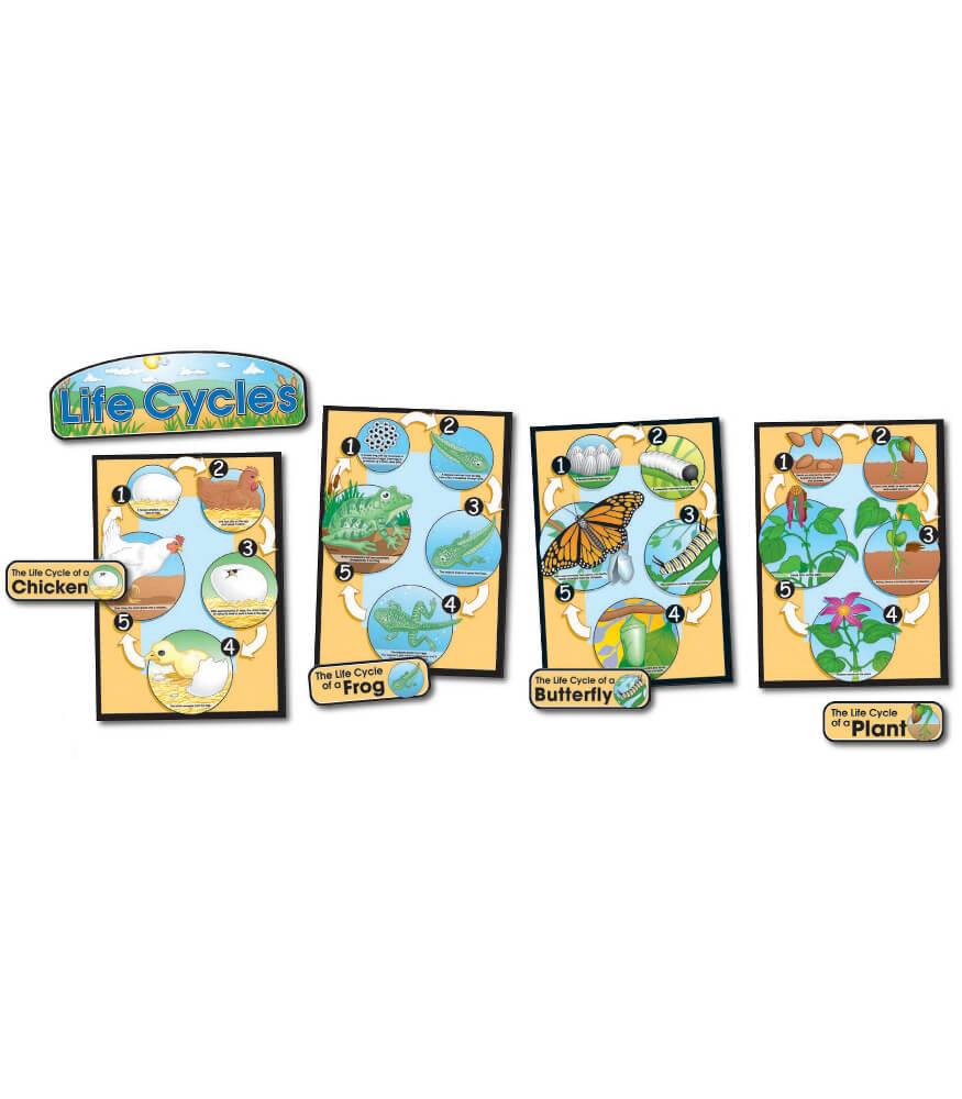 Life Cycles Bulletin Board Set Product Image