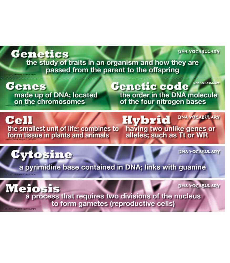 DNA Vocabulary Mini Bulletin Board Set Product Image