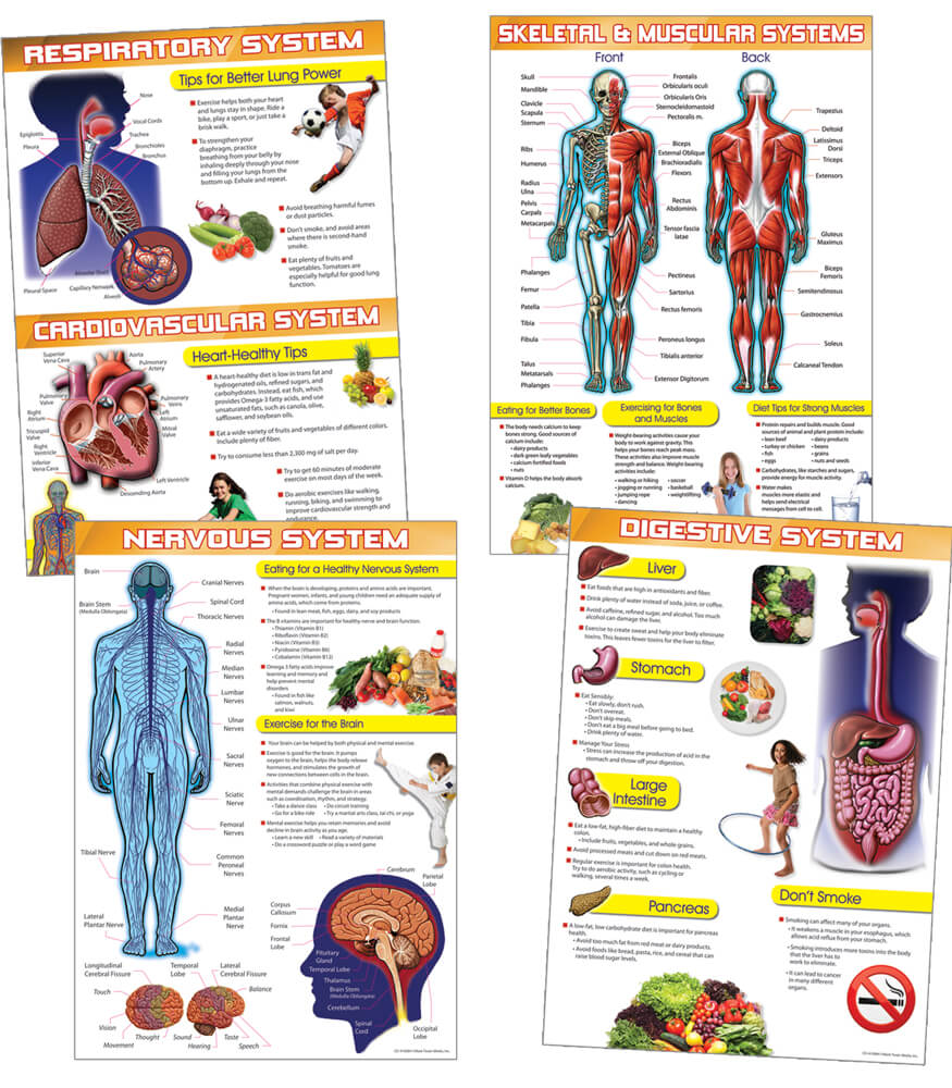 Human Body and Health Tips Bulletin Board Set Product Image