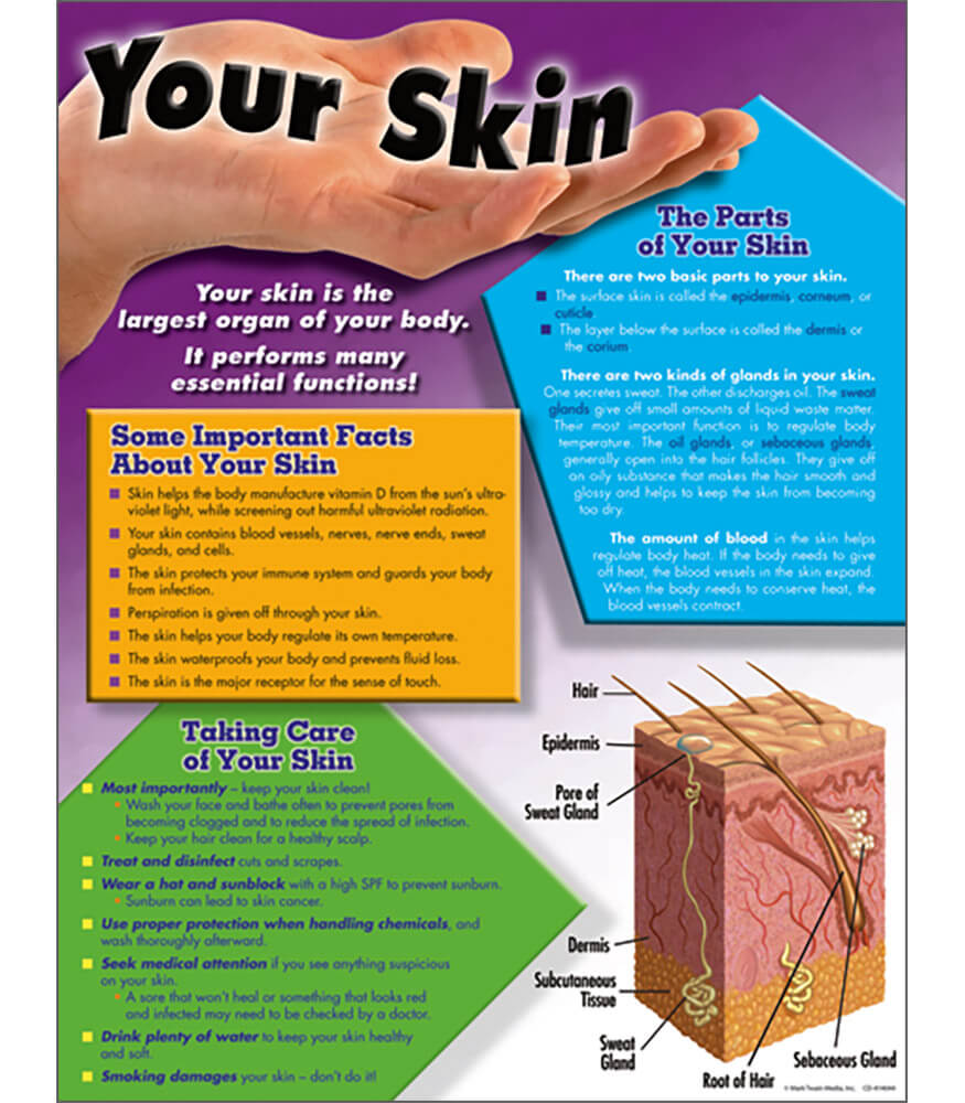 Your Skin Chart Product Image