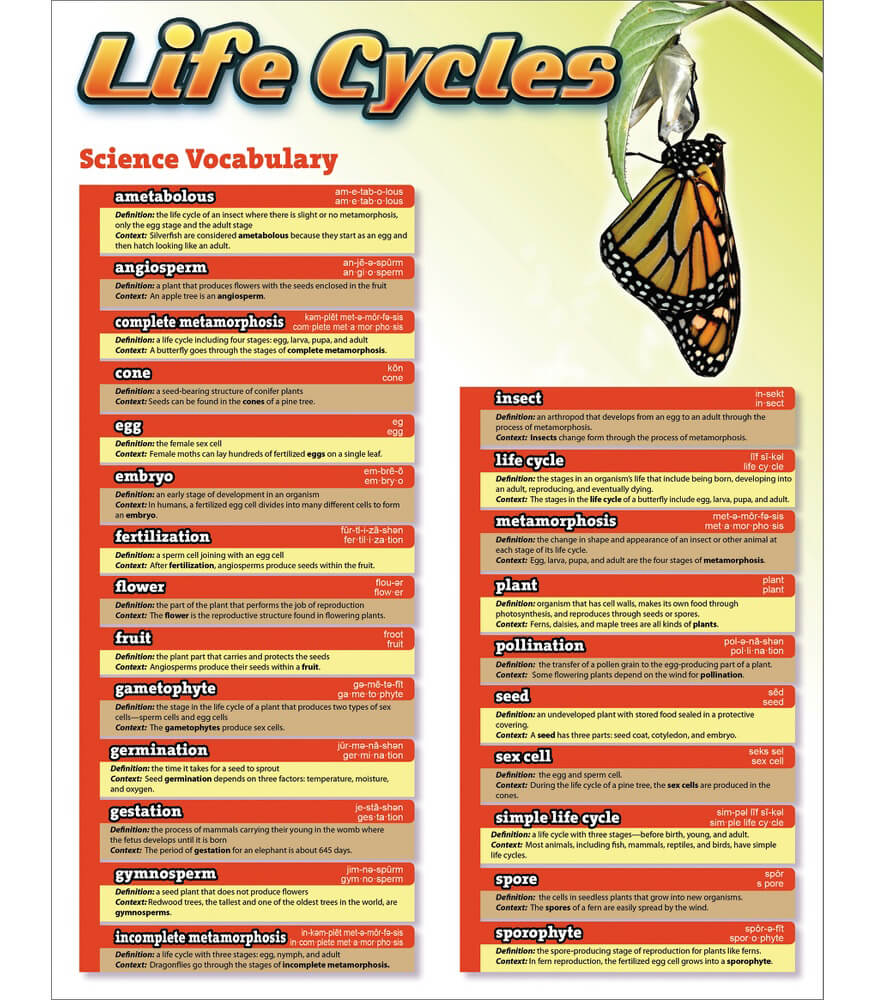 Science Vocabulary: Life Cycles Chart Product Image