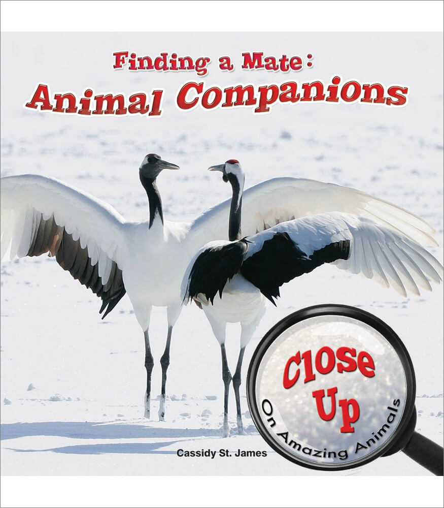 Finding a Mate: Animal Companions Reader Product Image