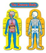 Child-Size Human Body Bulletin Board Set Product Image