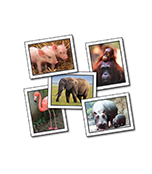 Favorite Animals Learning Cards Product Image
